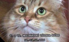 V. a VI. Výstava koček